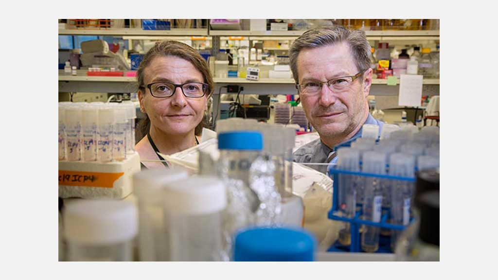 Fred Hutch Gene editing may lead to a cure for herpes.