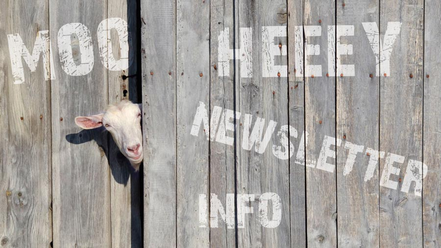 HW Newsletter